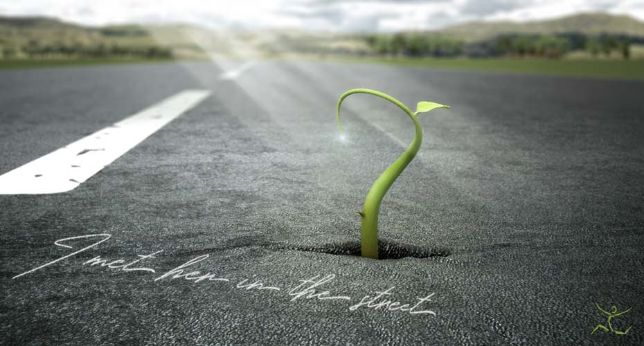 Picture shows a sprout breaking to the road. Asphalt can't stop life!